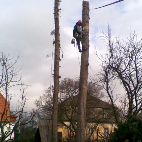 Arboristické práce, rizikové kácení stromů - Broumov