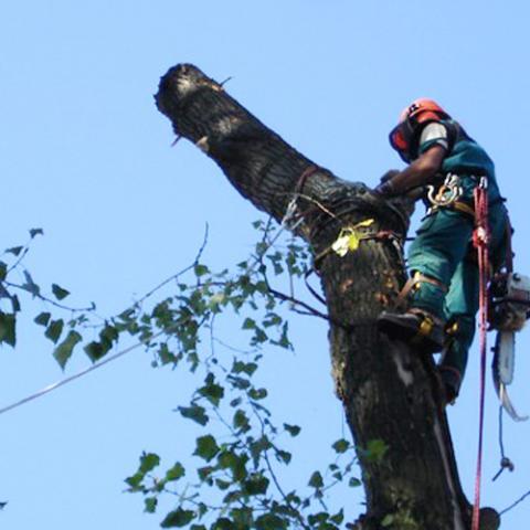 Arboristika, rizikové kácení stromů, HronovArboristické práce