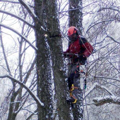 Arboristické práce, rizikové kácení stromů - Ruprechtice