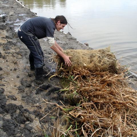 Krajinářské práce - instalace biorohoží - rybník Biřička, Hradec Králové 2
