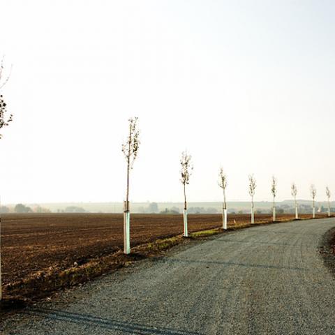 Krajinářské úpravy - výsadba stromků u polní cesty - Kolín