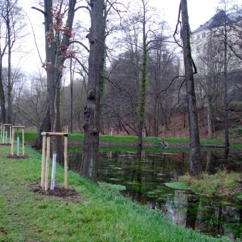Krajinářské práce - výsadba stromků u rybníka - Hrubý Rohozec