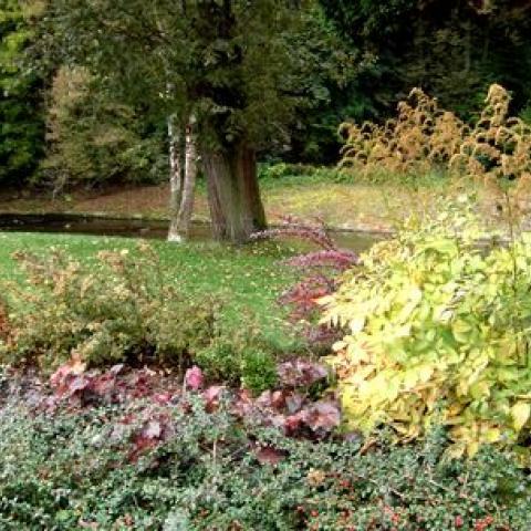 Parková úprava - výsadba - Suchovršice 2