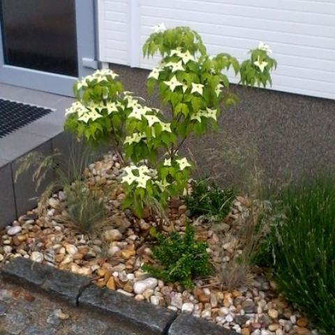 Parkové úpravy - výsadba rostlin (Corpus Cousa)
