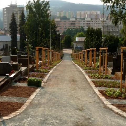 Výsadba stromořadí - Náchod, hřbitov