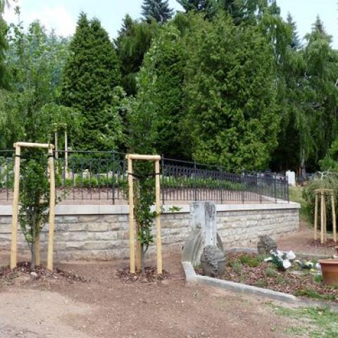 Úprava parku - výsadba stromků - Náchod