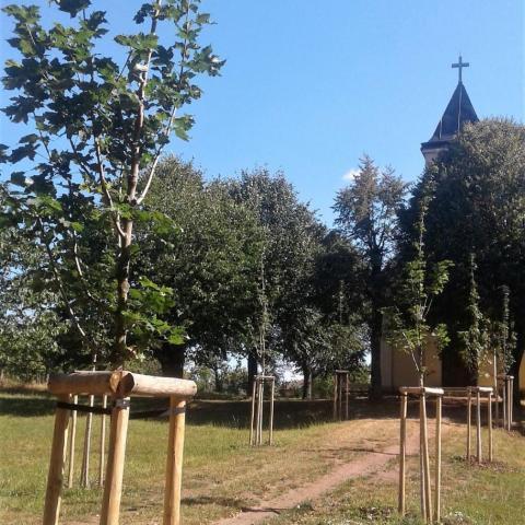 Sadové úpravy - výsadba stromků - Borová