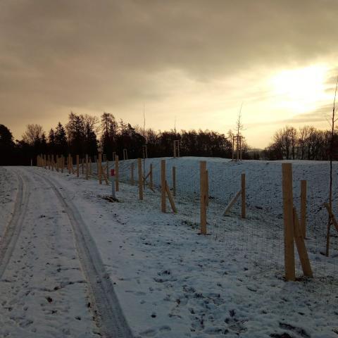 Krajinářské úpravy - protierozní opatření, oplocenky, výsadba stromků - Dubenec
