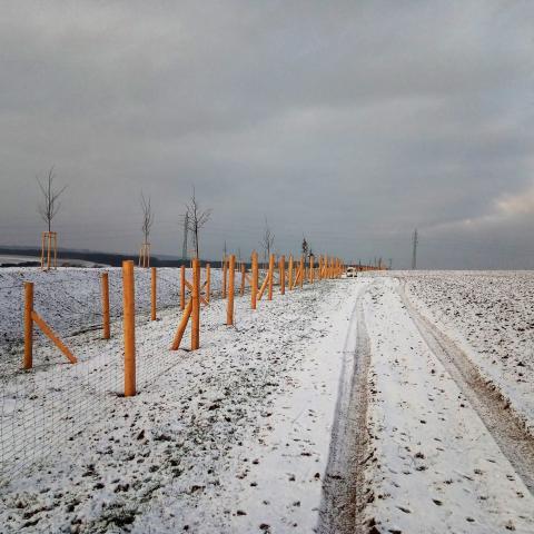 Krajinářské úpravy - protierozní opatření, oplocenky, výsadba stromků - Dubenec 2