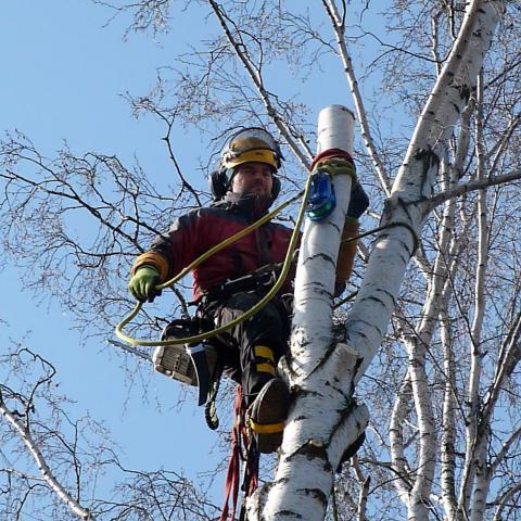Arboristika, rizikové kácení stromů, Náchod