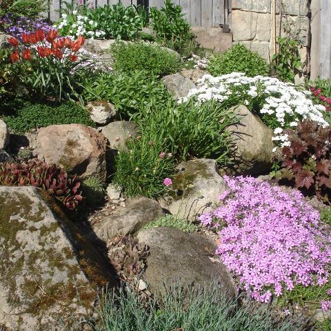 Zahradní úprava - výsadba skalky, skalničky