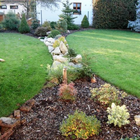 Úprava zahrady - výsadba jehličnanů