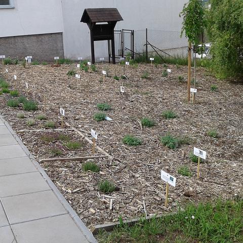 Výsadba bylinkové a ovocné zahrady u ZŠ - Náchod 2