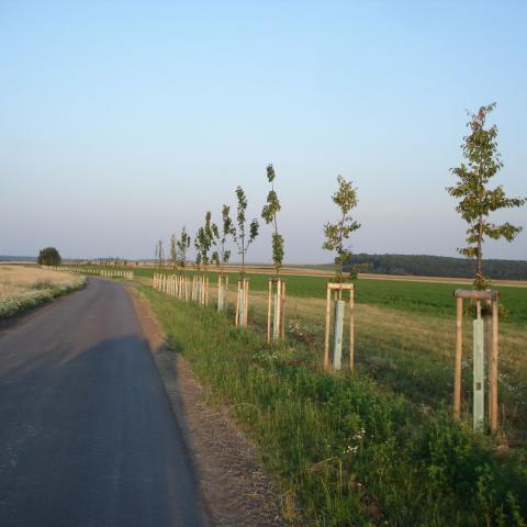 Krajinářské úpravy - výsadba stromů u polní cesty